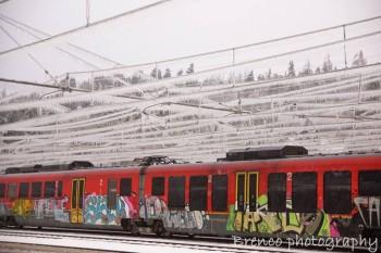 Gelicidio: tra pioggia e neve, uno dei fenomeni più pericolosi in Natura.