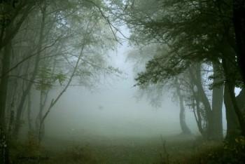 Umidità alle stelle sul Nord Italia, nebbia anche d'estate, situazione al limite