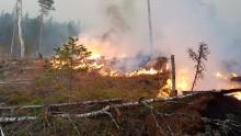 Emergenza incendi in Svezia, continua il periodo caldo e siccitoso e cadono i record