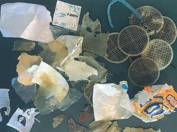 Uccisa dalla plastica: ecco cosa conteneva lo stomaco della tartaruga marina spiaggiata nel Cilento