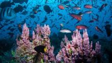 Ascension Island diventa la più grande area marina protetta dell'Oceano Atlantico
