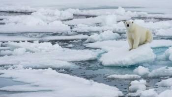 I ghiacci artici raggiungono la massima estensione di questo inverno: è la settima più bassa negli ultimi 40 anni!