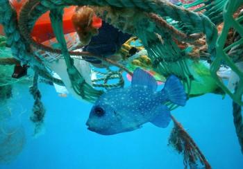 L'inquinamento marino da plastica costa 2.500 miliardi di dollari all'anno