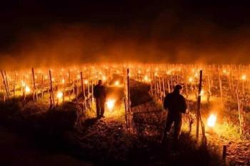 Gelate tardive in Europa: vitigni a rischio