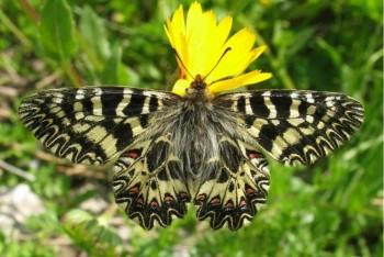 Giornata della biodiversità: in Italia 596 specie rischiano l'estinzione