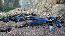 I mari europei sono avvelenati da metalli pesanti e sostanze chimiche