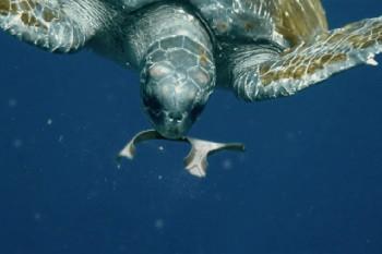 Marine litter: dagli Usa l'imballaggio commestibile per i pesci