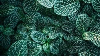 Scoperto il gene che permette alle piante di assorbire più CO2