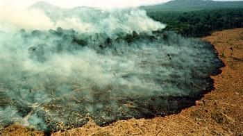 I polmoni della Terra stanno bruciando, il disastro in Amazzonia si vede dallo spazio