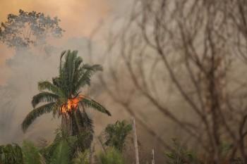 L'Amazzonia continua a bruciare, 265 specie potrebbero scomparire del tutto