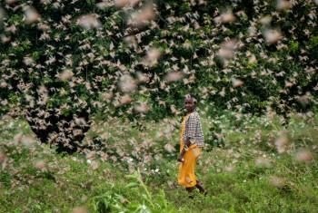 Giornata mondiale dell'Ambiente: dalle locuste alla pandemia, i segnali di un Pianeta che soffre
