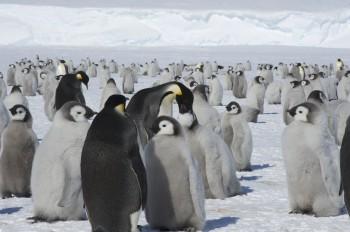 Antartide, nuove colonie di pinguini imperatore scoperte dallo spazio