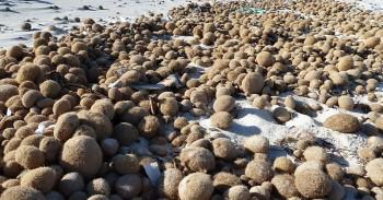 """Le alghe """"ci fanno un favore"""" intrappolando la plastica e riportandola sulle spiagge"""