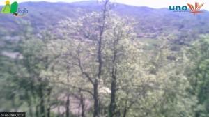 Mioglia (SV)